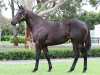 Lot 481 Lonhro x Five Star Belle