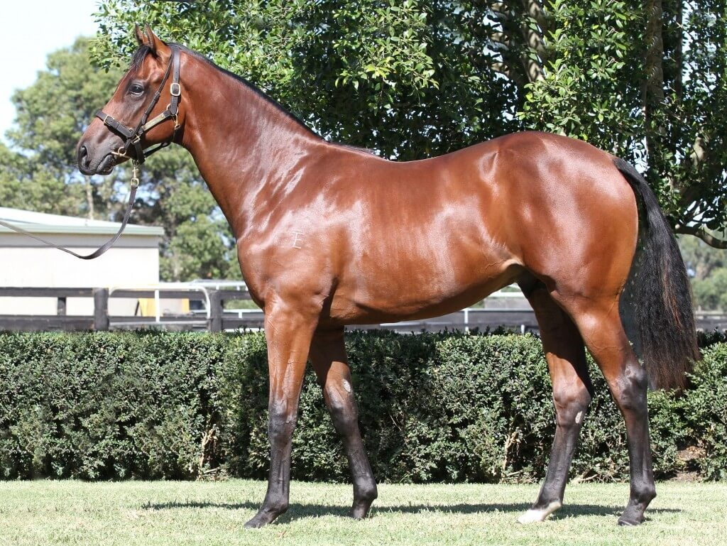 Bel Esprit x Encapsulate_06-02-2015_GEN_Lauriston Thoroughbred Farm__504