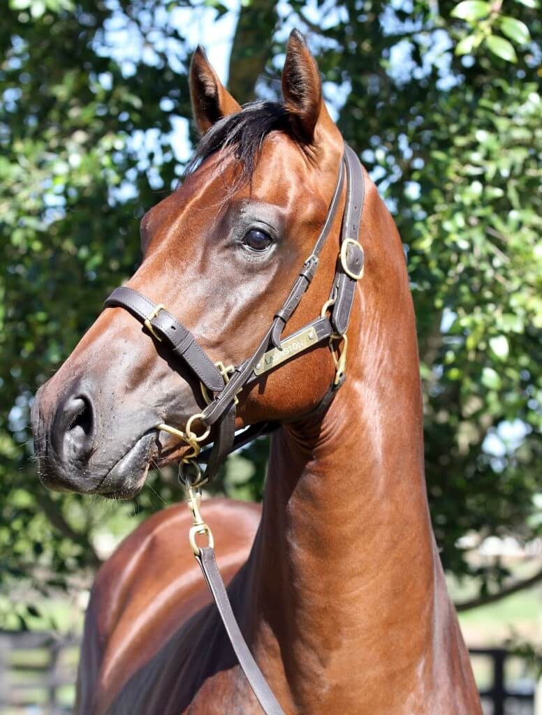 Bel Esprit x Encapsulate_06-02-2015_GEN_Lauriston Thoroughbred Farm__523 cropped
