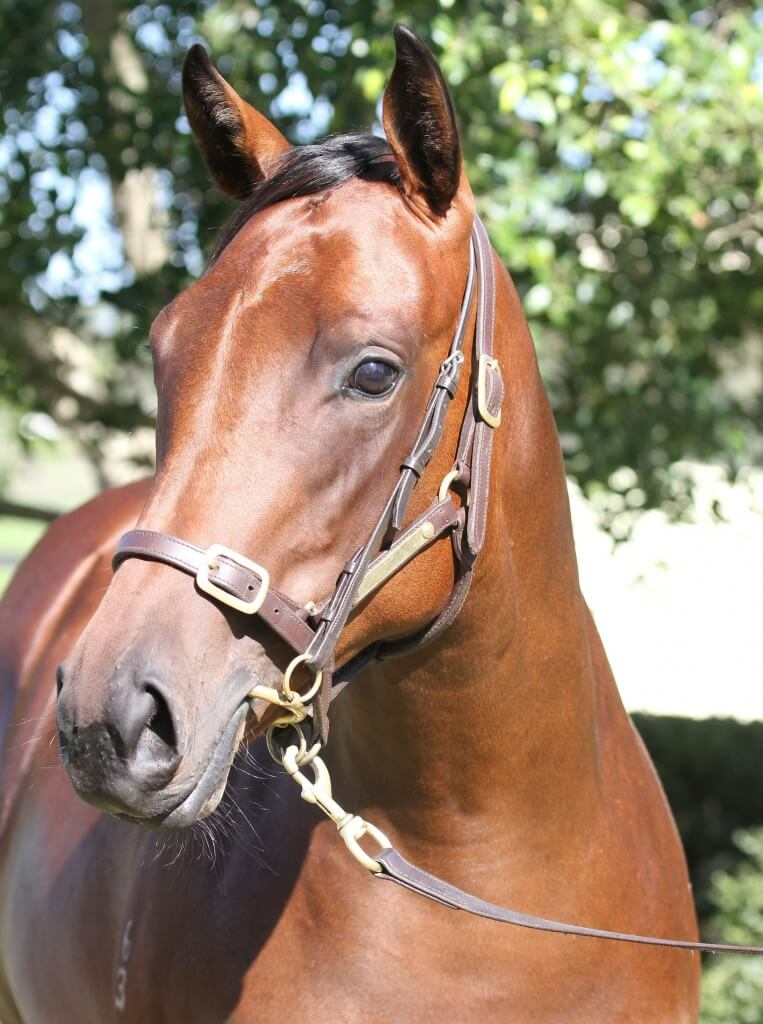 Commands x Show Stealer_06-02-2015_GEN_Lauriston Thoroughbred Farm__410 cropped