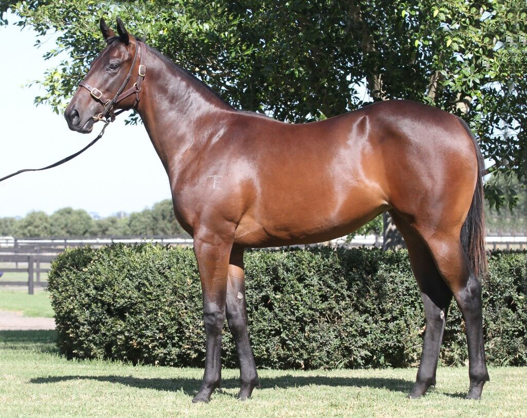 Exceed And Excel x Rapidement_06-02-2015_GEN_Lauriston Thoroughbred Farm__196