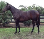 Finke as a yearling