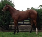 Lot 107 Magnus x Here For Glory