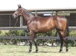 Lot 121,Encosta De Lago x Complete Control_31-01-2014_GEN_Lauriston Thoroughbred Farm__1959