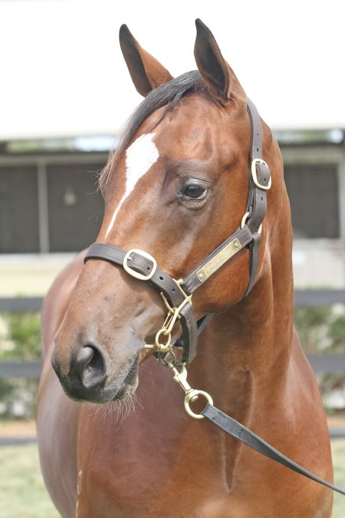 Lot 150,Domesday x Yatala_10-02-2013_GEN_Lauriston Thoroughbred Farm__391