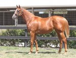 Lot 190,Not A Single Doubt x Emily Delago_31-01-2014_GEN_Lauriston Thoroughbred Farm__2170
