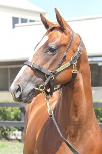Lot 190,Not A Single Doubt x Emily Delago_31-01-2014_GEN_Lauriston Thoroughbred Farm__2187