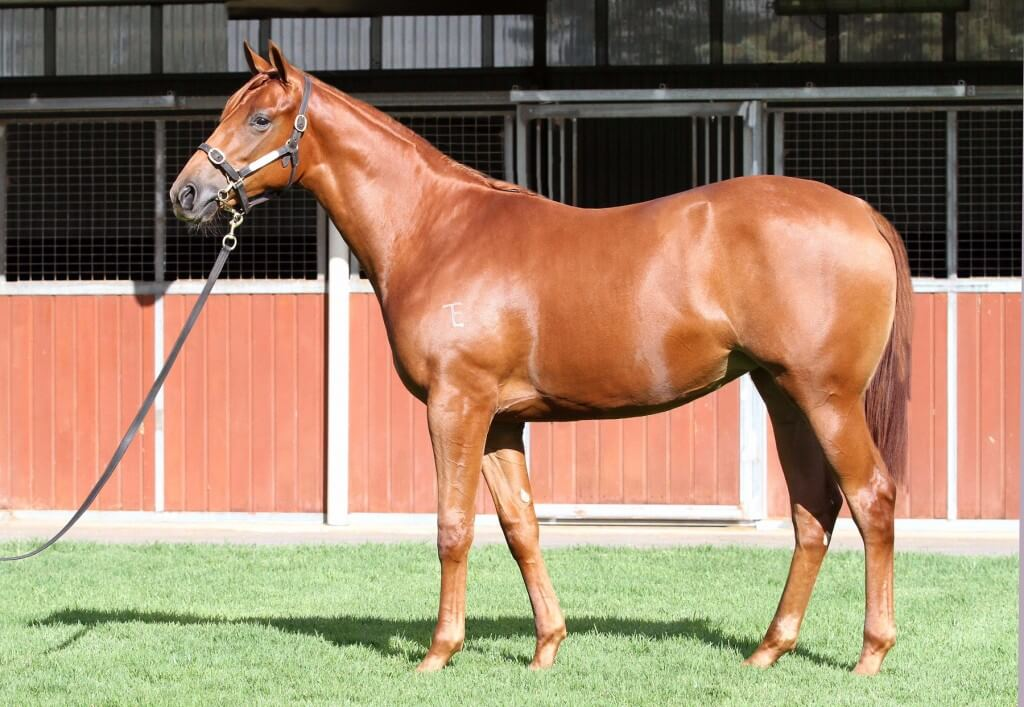 Lot 276,Street Cry x Amarazetti_20-03-2015_GEN_Three Bridges Thoroughbreds__86