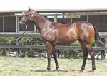 Lot 283,Snitzel x Glorious Spirit_31-01-2014_GEN_Lauriston Thoroughbred Farm__2261