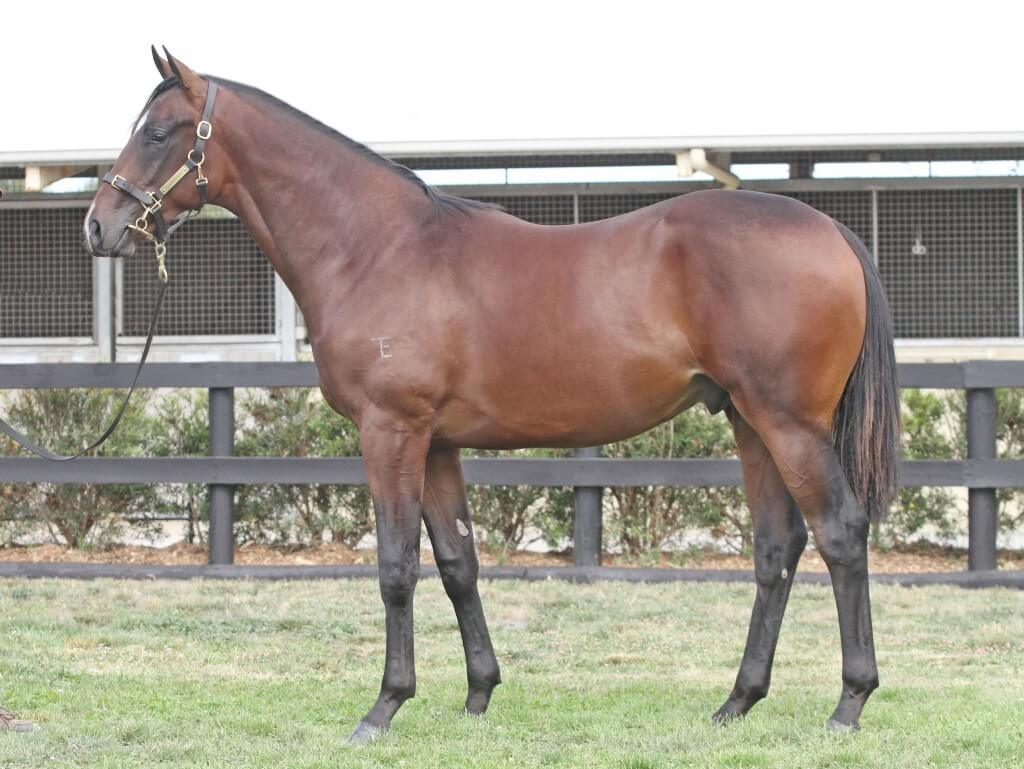 Lot 405,Redoute's Choice x Glimmers_10-02-2013_GEN_Lauriston Thoroughbred Farm__302