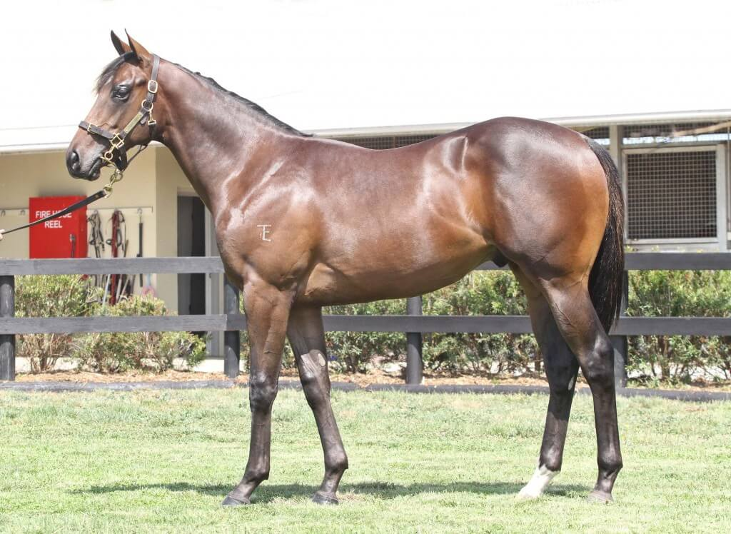 Lot 43,Bianconi x Tendue_05-02-2013_GEN_Lauriston__1228