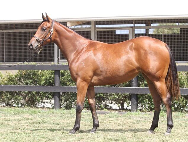 Lot 452,Charge Forward x Paramount_31-01-2014_GEN_Lauriston Thoroughbred Farm__1871