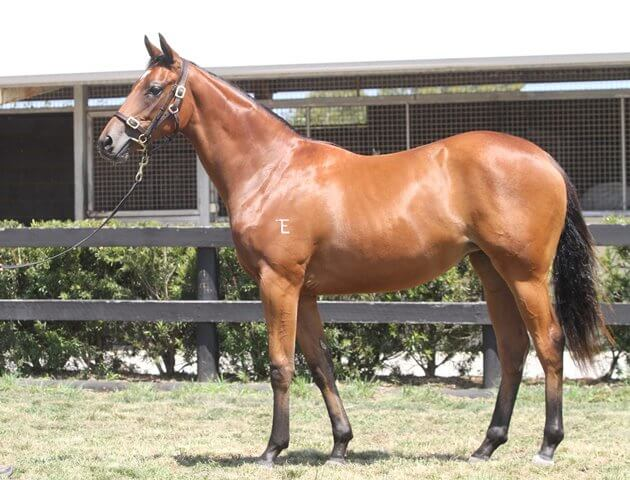 Lot 477,Flying Spur x Pride Of Encosta_31-01-2014_GEN_Lauriston Thoroughbred Farm__2399