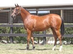Lot 549,Exceed And Excel x Show Stealer_31-01-2014_GEN_Lauriston Thoroughbred Farm__2101