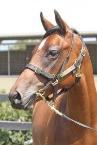 Lot 549,Exceed And Excel x Show Stealer_31-01-2014_GEN_Lauriston Thoroughbred Farm__2134
