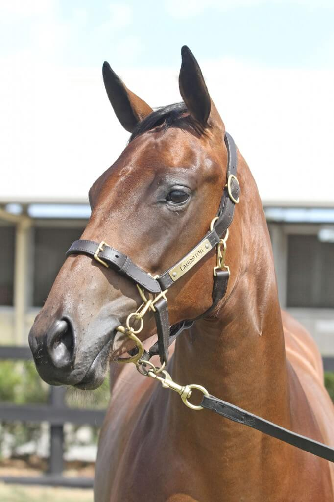 Lot 724,Turfonttein x Let It Ring_10-02-2013_GEN_Lauriston Thoroughbred Farm__1185