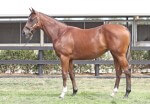 Lot 761,Domesday x Partygoer_10-02-2013_GEN_Lauriston Thoroughbred Farm__993