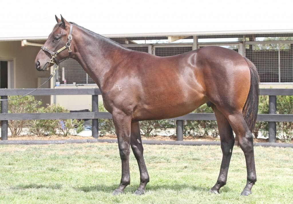 Lot 84,Al Maher x Spectacula_10-02-2013_GEN_Lauriston Thoroughbred Farm__1333