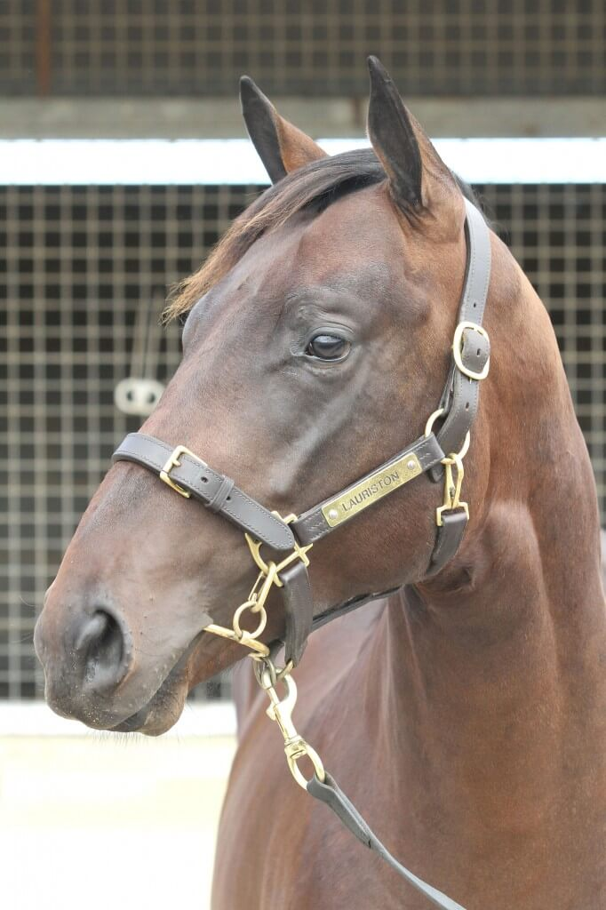 Lot 84,Al Maher x Spectacula_10-02-2013_GEN_Lauriston Thoroughbred Farm__223