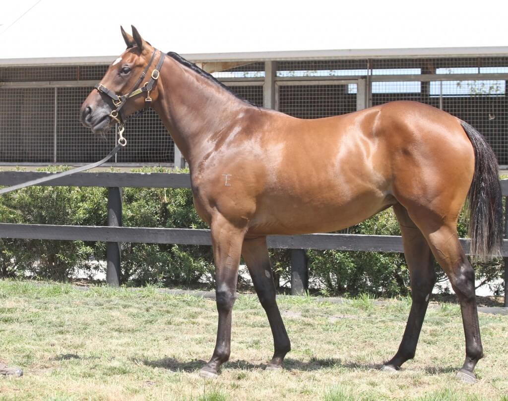 Lot 92,Teofilo x Encapsulate_31-01-2014_GEN_Lauriston Thoroughbred Farm__2562