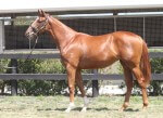 Lot 93,Mossman x Entango_31-01-2014_GEN_Lauriston Thoroughbred Farm__2519