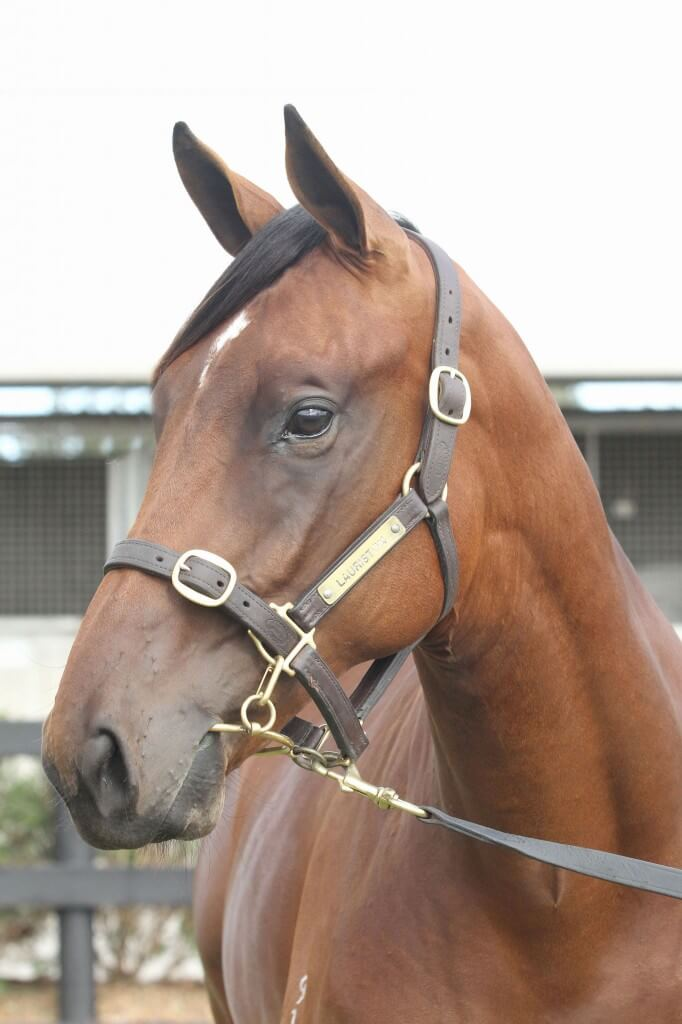 Lot 95,Encosta De Lago x Street Smart_10-02-2013_GEN_Lauriston Thoroughbred Farm__104
