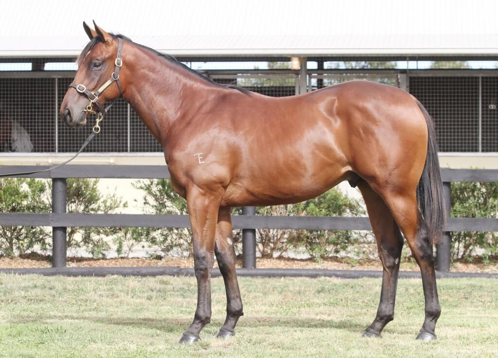 Lot 95,Encosta De Lago x Street Smart_10-02-2013_GEN_Lauriston Thoroughbred Farm__48