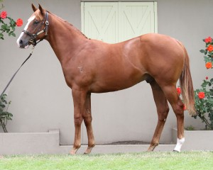 Snitzel x Inthemix_18-12-2014_GEN_Lauriston Thoroughbred Farm__1060